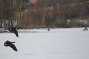 Østensjøvannet 11 mars 2017 - De danser over isen