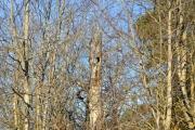 Strålende morgen og her ser vi Ugletreet, men fant ingen Ugle