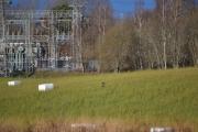 På sletta skinner solen og noen fugler koser seg