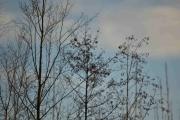 Enda flere småfugler i dette treet