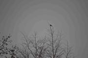På toppen her sitter også en liten fugl