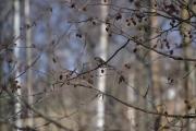 Flere fugler i fin posisjon