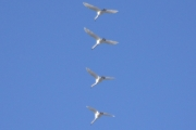 Klokken 08.45 tar vi bilder fra verandaen av 4 Svaner på vei til Østensjøvannet