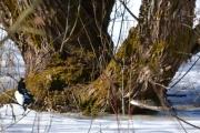 På vei hjemover ser jeg to kjenninger har funnet noe interessant bak et tre, du kan se stjerten