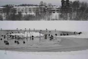 Skal bli spennende og se hvor mye som er åpent i februar det er meldt veldig kaldt da