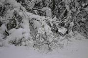 Der sitter det også en, godt gjemt bak litt snø