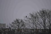 En litt stor fugl oppi i treet der fremme