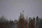 Men her har vi en fugl til høyt på toppen av det treet