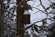 Til og med flaggermus kassene har snø på taket