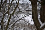 Lite fuglekvitter å høre men vi ser da folk pilker på isen