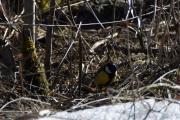 Var ikke mange småfugler i dag