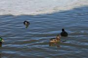 Vi følger dem litt på vannet