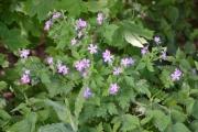 Vi starter med rosa/lilla blomster