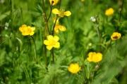 Skriver på gøy gule blomster