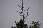 En fugl høyt oppe i treet