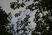 Liten fugl i treet her