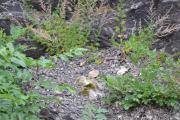 Hovedøya - Men vi fant ikke noen fossiler
