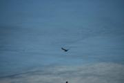 Store vinger, kommer glidene - hva kan det være?