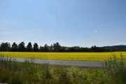 Vi har passert Lillestrøm og kjører mot Fetsund, en gul åker ser vi her. Har det noe med rapsolje å gjøre?