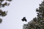 Imens så ble jeg distrahert av en fugl der oppe i tretoppen