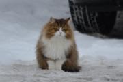 Men litt av Oslo så du, og her er en søt katte