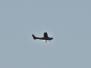 Småfly 2020