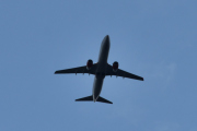 Morten 8 juli 2020 - Stort fly over Høyenhall, snart er vi i gang igjen håper jeg