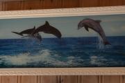 Delfinbilde uten lys på veggen