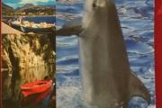 Delfin postkort