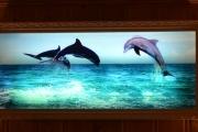 Delfinbilde med lys