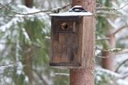 Knut sin Spurvugle kasse - hjemmelagd