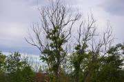 Kevin fanger opp et tre som ikke har blader på seg helt opp i toppen. Men jeg ser minst to fugler der også