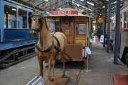 Men jeg tror han husker litt av hesten, her tar han i hvert fall et bilde til av den