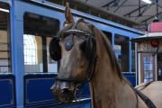 Hesten mangler øret sitt, akkurat som i 2014 også :-)