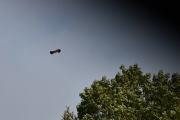 Jo, Knut for øye på denne fuglen høyt oppe i luften og da nytter det ikke å sitte i bilen å ta bilder