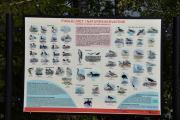 Her kan vi se alle fuglene vi kan finne i naturreservatene, men vi finner nok ikke alle sammen i dag