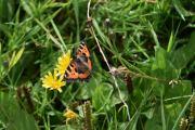Det er mange sommerfugler her ute også, vi kan jo ta bilde av noen av dem