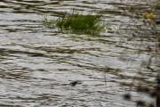 Dem er jo så raske også, dem som gjemmer seg langs vannkanten og fyker opp