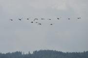 Mens vi er på vei til stien, flyr det store fugler over oss