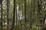 Så nå er vi på stien og Knut går først, oppdager han noe, så kommer jeg løpenes