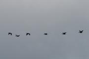 Noen steder kan vi titte opp og da ser vi ofte en fugleflokk