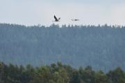 Fugler så store som fly og de vet jeg alt om