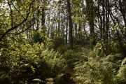 Men Knut vil ha meg litt lenger inn i jungelen, han syns at han hørte en ugle