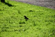 Vi rusler litt ned Myntgata til vi kommer til Grev Wedels Plass hvor jeg ser den første fuglen