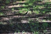 Fra broen ser jeg ned og oppdager en fugl, klarer vi å ta bilde når den er i solen da?