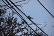 Men vider opp Morells vei ser jeg en fugl og den zoomer jeg inn