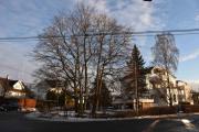 Nå er vi ved krysset rett ovenfor hvor Kapellveien og Lindealleen er, skulle nok ha zooma inn disse fine store trærne