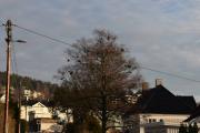 Men det er mer spennende og se i denne veien, se dette treet her for eksempel