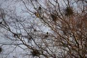 Her er det fugler og de skinner gult