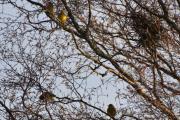 Hvilke fugler kan dette være?